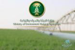 """""""البيئة"""" تطرح 101 وظيفة للسعوديين بمركز الملك عبدالعزيز للخيل العربية"""