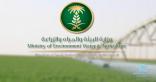 """""""البيئة"""": 4 آلاف ريال غرامة مالية لكل هكتارِ أعلافٍ مزروع بدون رخصة"""