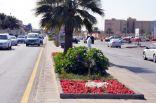 أكثر من 8 مليون زهرة ووردة تزدان بها مدن حاضرة الدمام