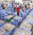 #وزارة_الزراعة : تحدد مواعيد صيد الروبيان لهذا العام