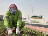 8 ملايين ريال لمشروع تحسين المشهد الحضري بطرقات حاضرة الاحساء