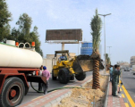#بلدية_الخبر تزرع 140 نخلة على طريق الأمير سلطان